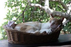 Paul beim Mittagsschlaf, 16.08.2012