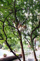 Paul im Baum:-)