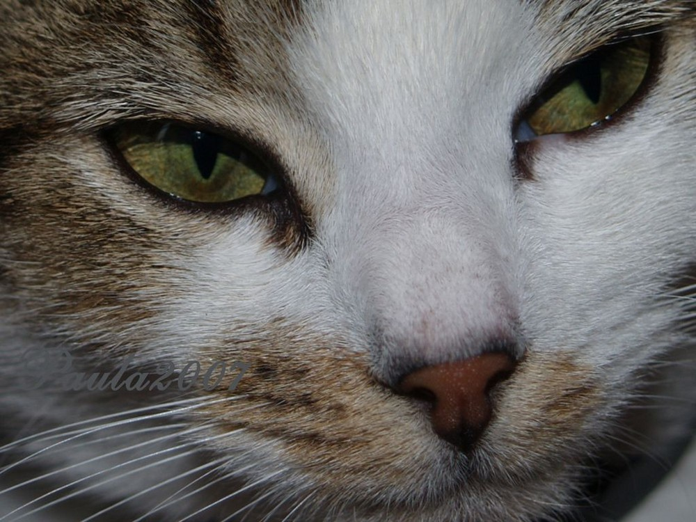 Paula2007