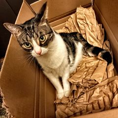 Pauli in the box IV
