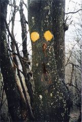 Paura nel bosco...