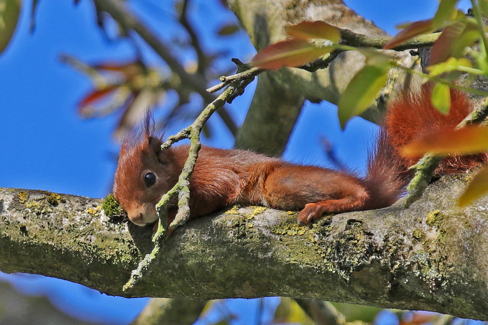 Pause im Nussbaum