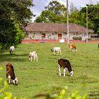 Pavas - Valle del Cauca - Colombia