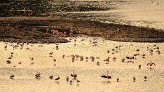 Paysage de l'Etang à l'Oeil de Ca dans la Réserve Africaine de Sigean
