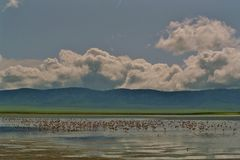 paysage du cratere du ngorongoro