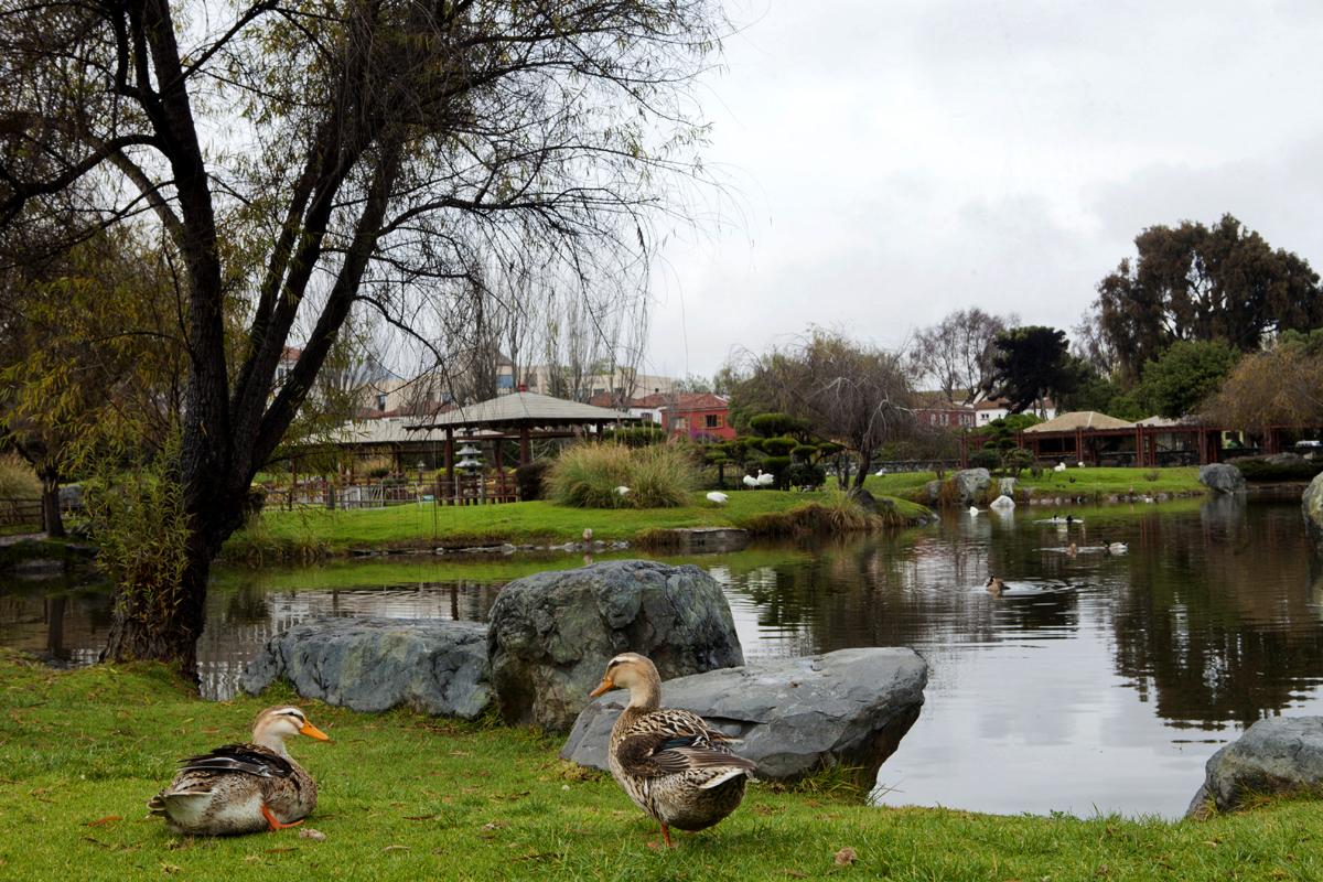 Paz en el jardín Japonés