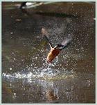 Pêche réussie