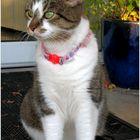 Pearl, the Museum Cat