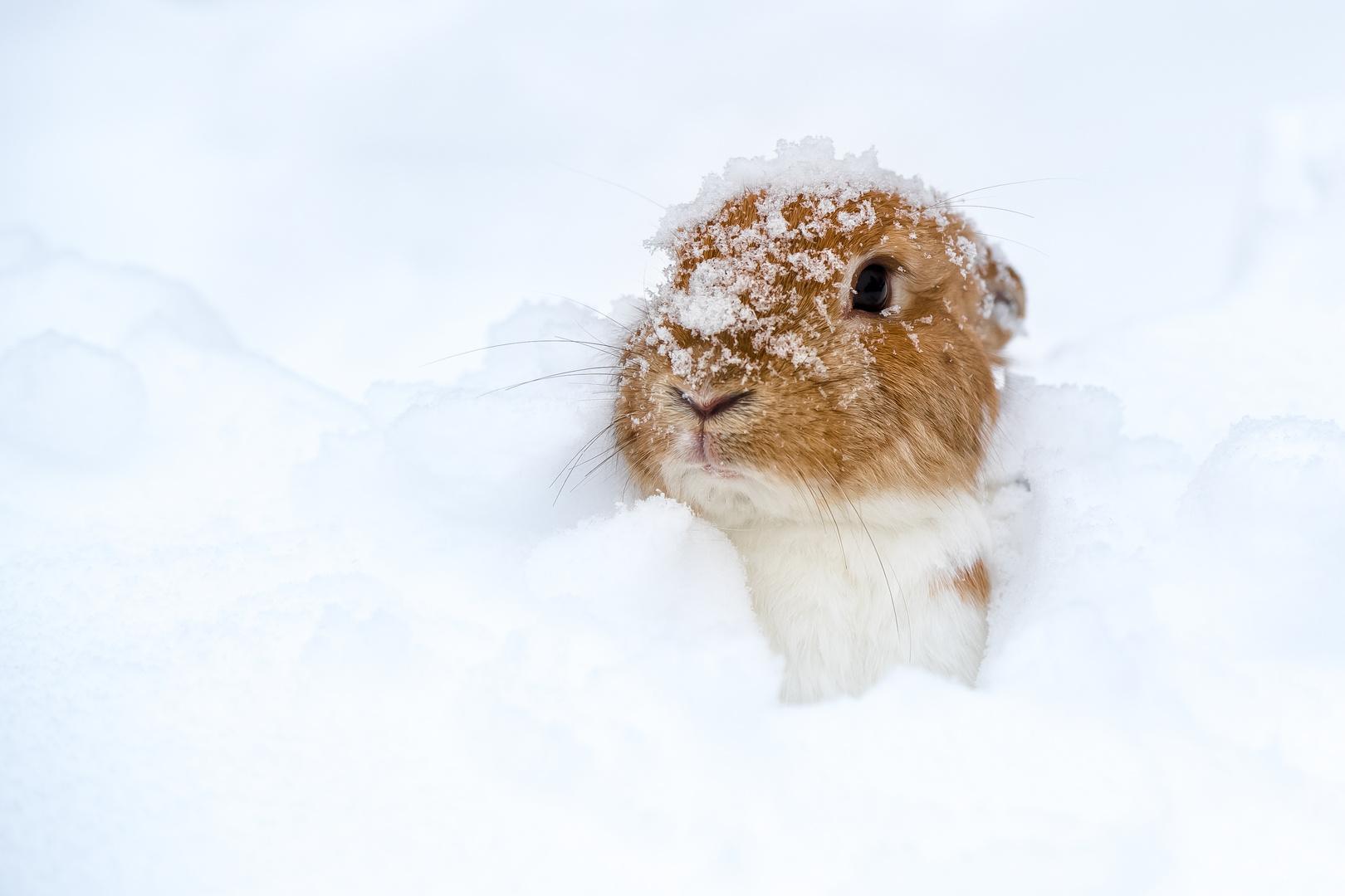 ...Pebbles im Schnee...