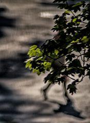 peeping shadows