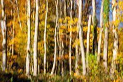 Peinture d'automne