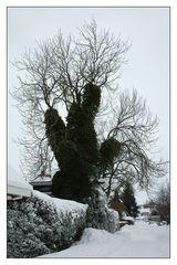 Peitschenbaum