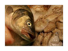 peix fresc #2