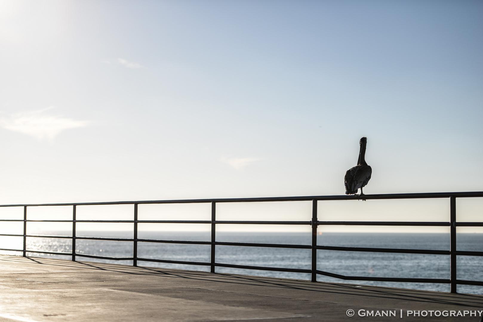 Pelican watch...
