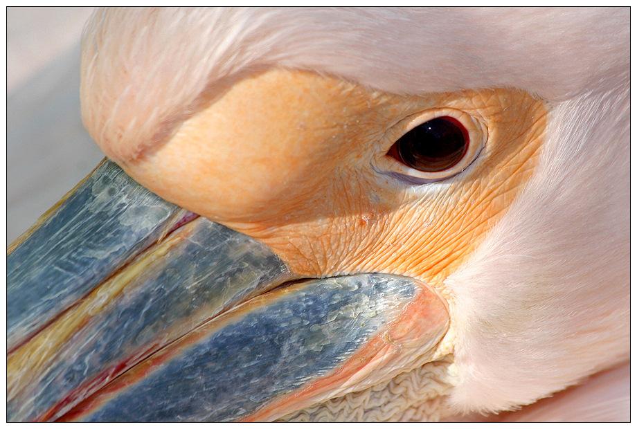 Pelikan 2