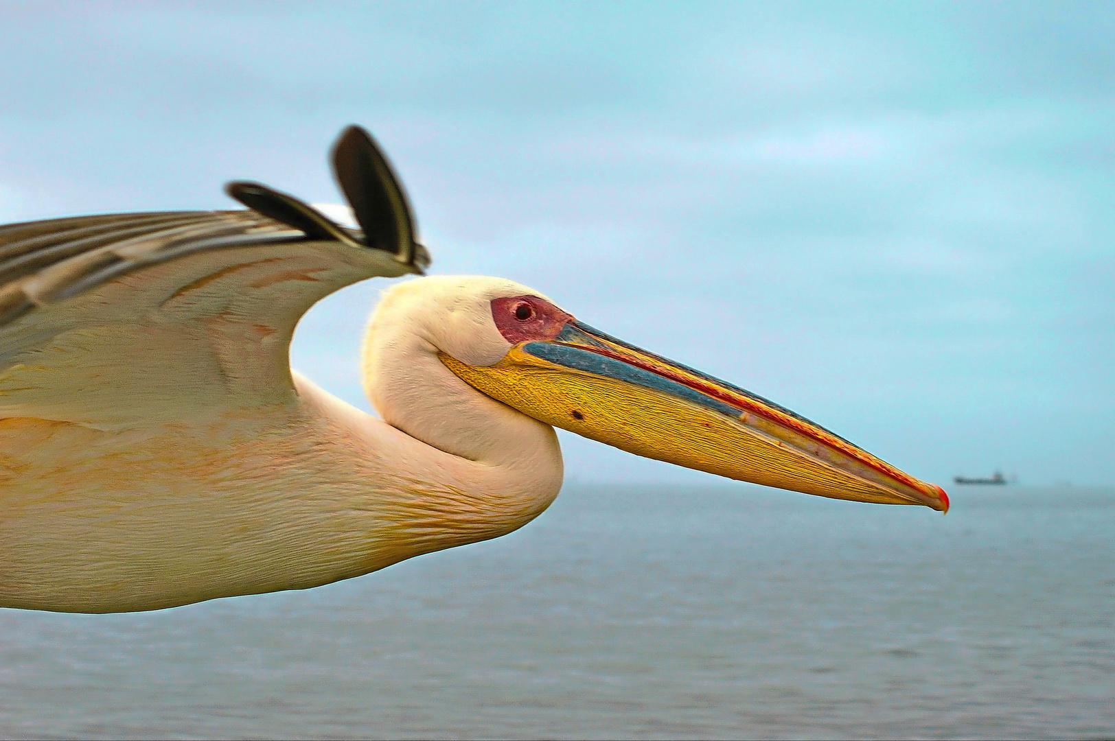 Pelikan bei Walvis Bay
