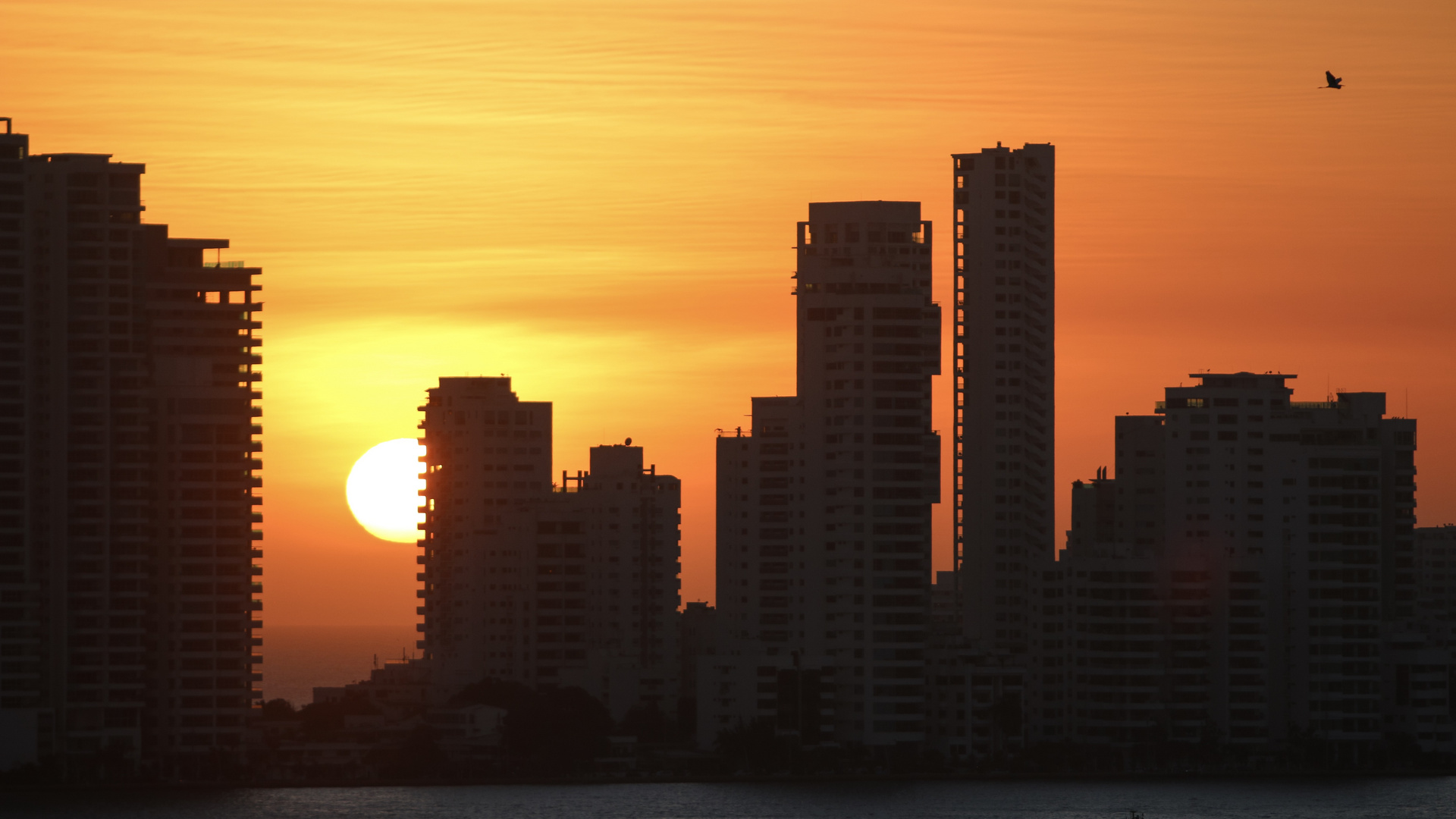 Pelikan in Cartagena