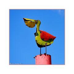 Pelikan mal anders :-)