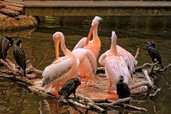 Pelikane & Co
