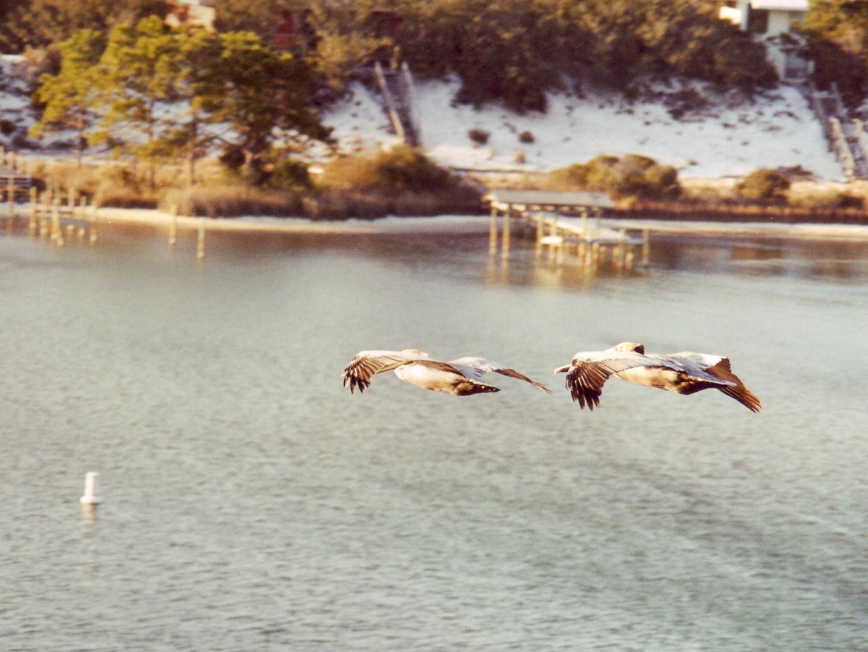 Pelikane vor Ono Island