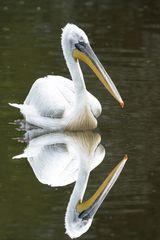 Pelikanspiegel-1