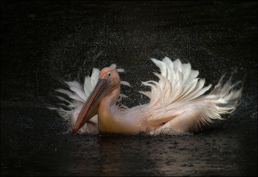 Pelikanwaschanlage :-)