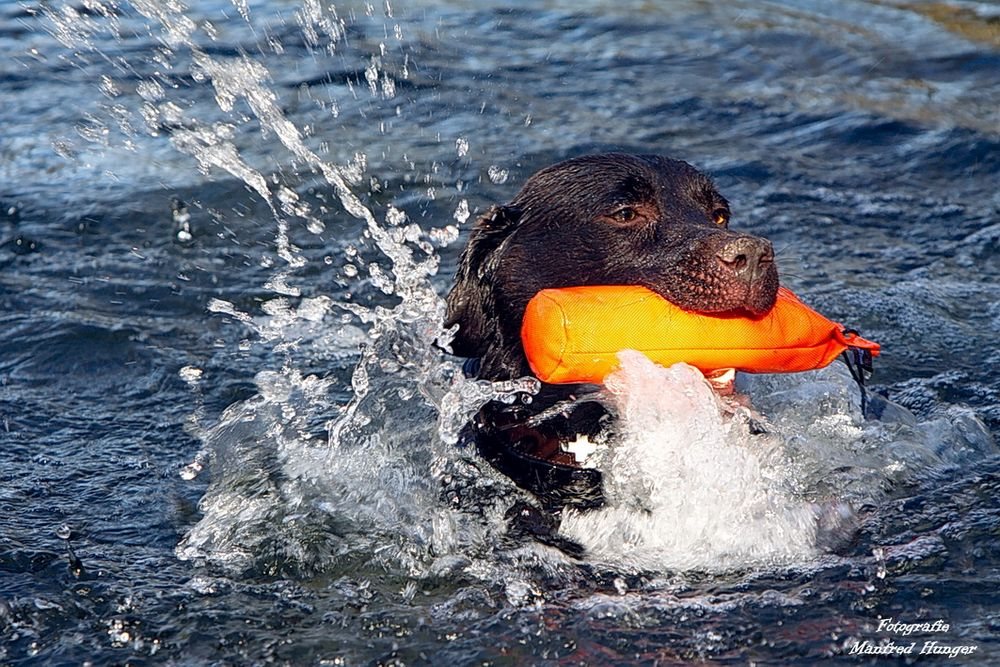 Pelle liebt das Wasser und sein Spielzeug