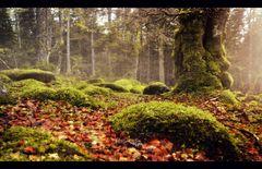 * Pelz des Waldes *