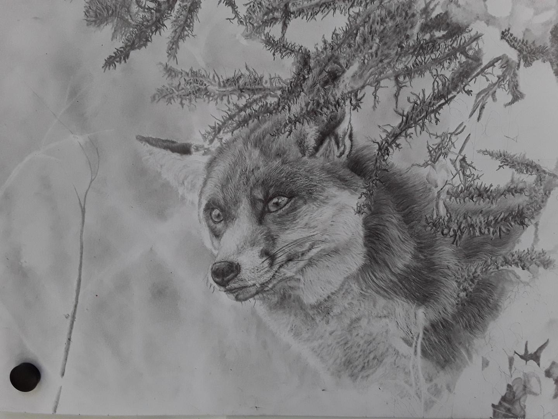 Pencil Drawing Fox