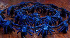 Penguin Tappers WM Kür: Spider Attack 3