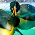 Penguins in motion