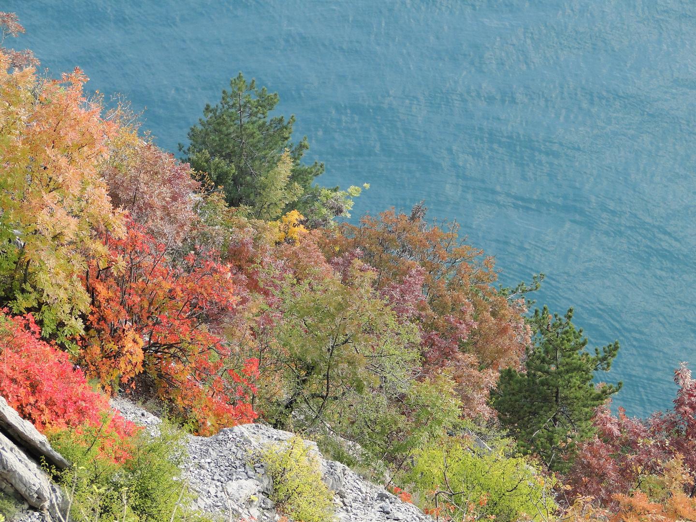 pennellata d'autunno