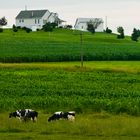 **pennsylvania meadows**