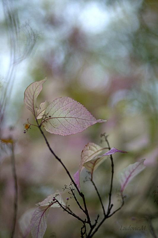 Pensées d'automne