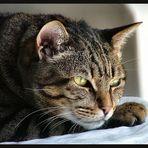Pensieri di gatto Soneca