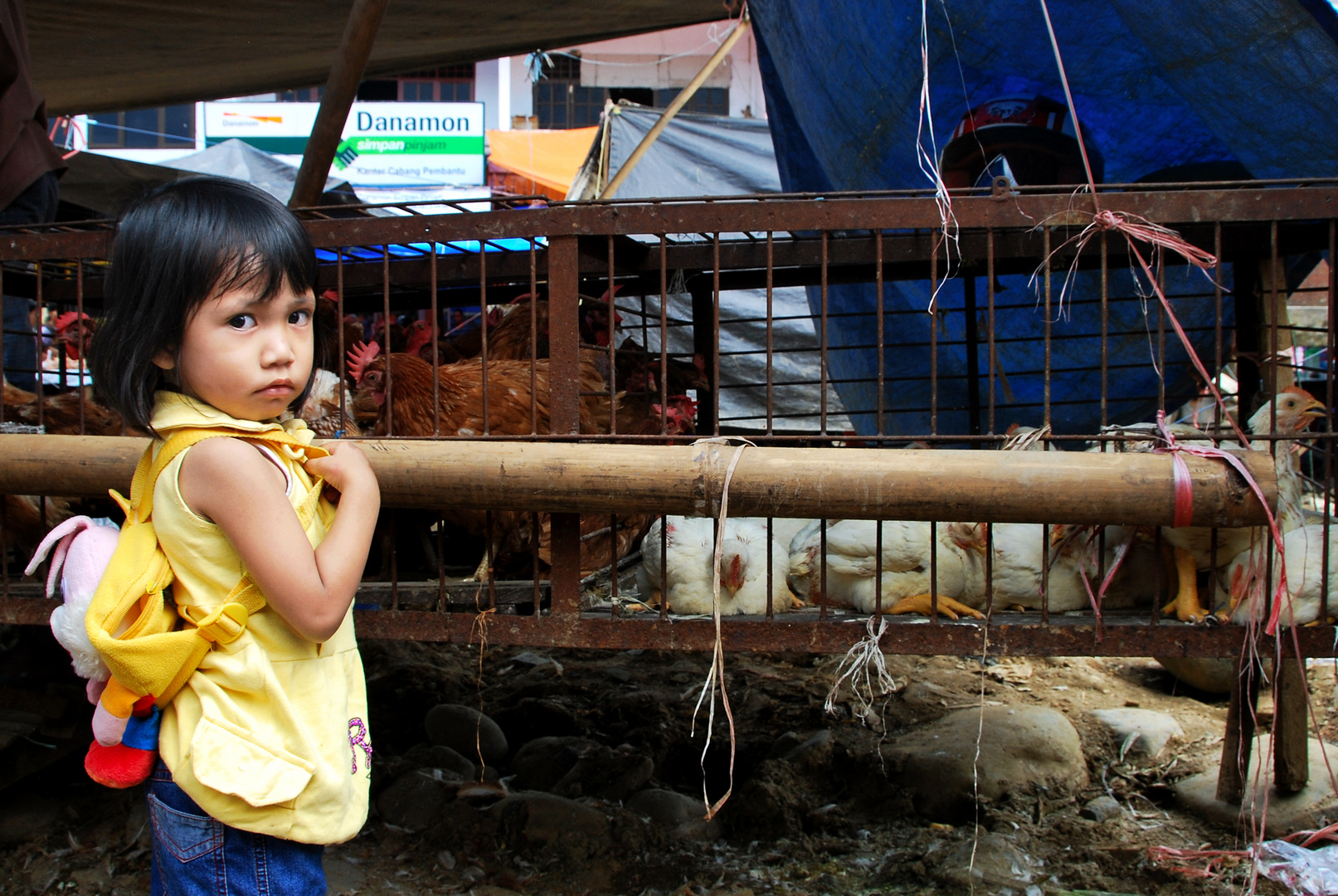 People of Tana Toraja   - 5 -