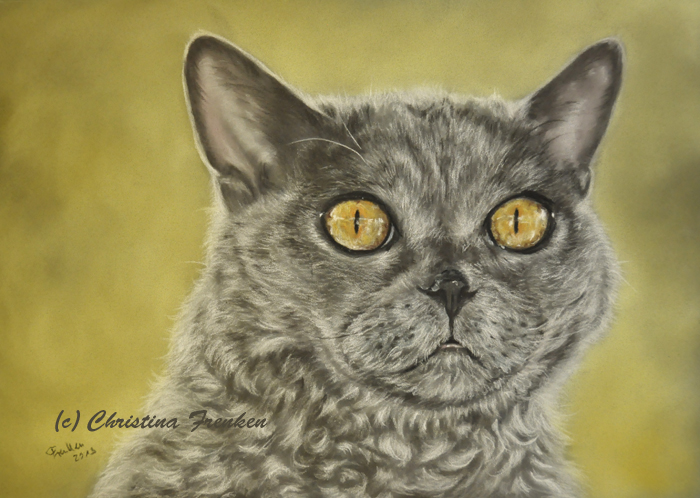Peppy, Selkirk Rex Katerchen