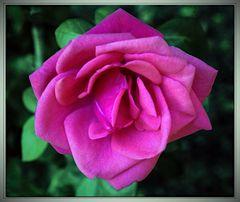 per lila...che ha notata la mia 3333 foto postata .....
