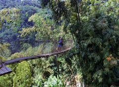 Perdu dans les bambous géants