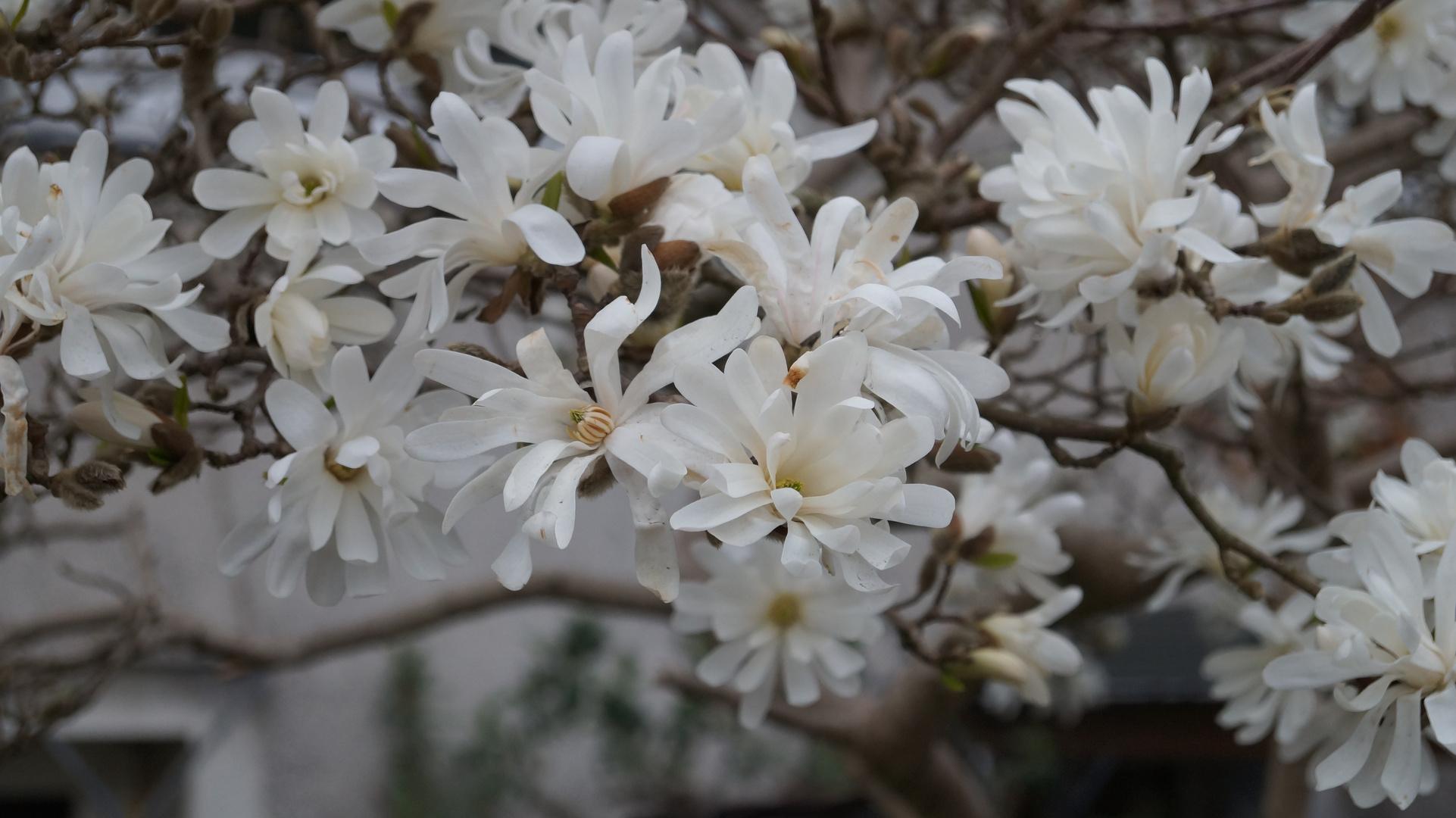 Perfekte Blume(n)