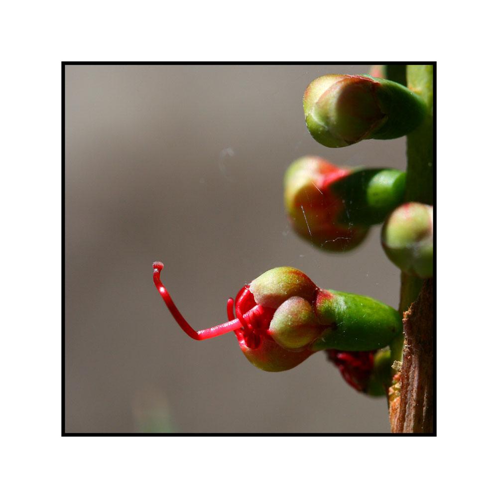 Périscope végétal