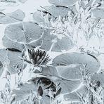 Perlacher Forst #1 - Blüte einer Weißen Seerose - Fälschung