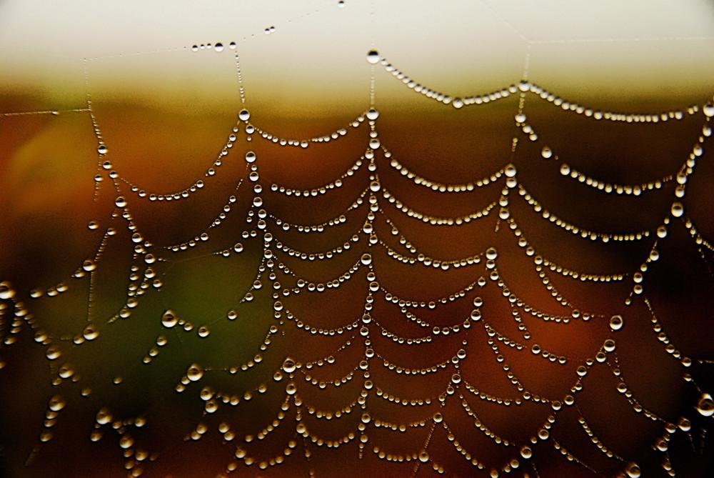 Perle di ragno