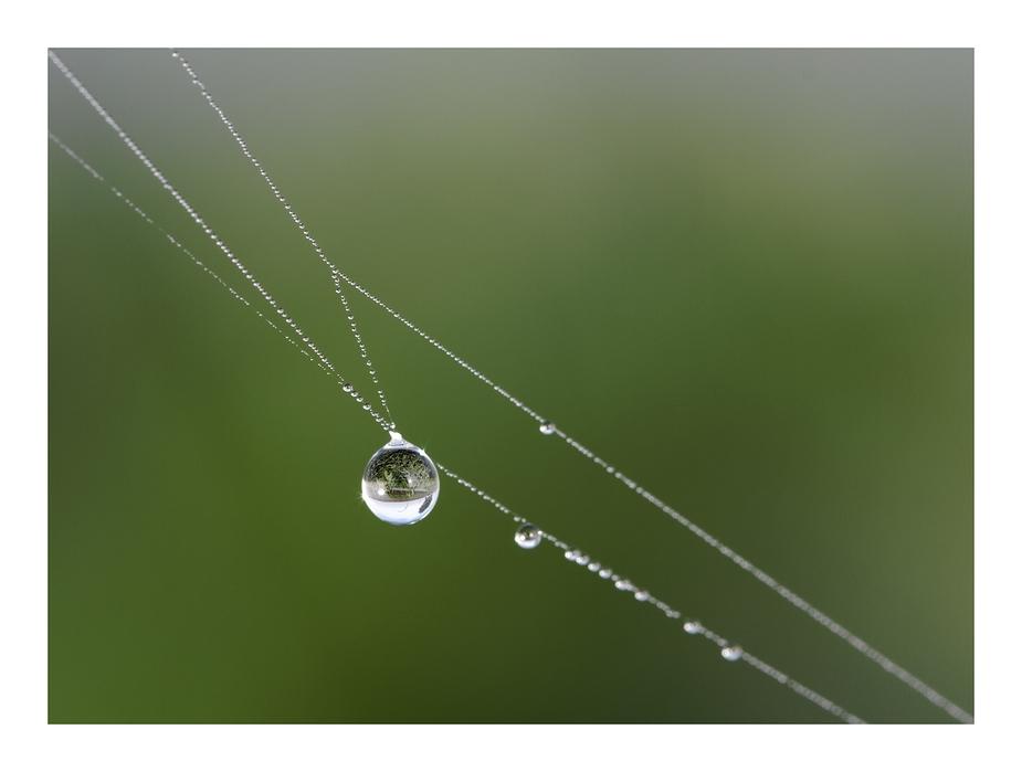 ~ Perlen der Natur ~