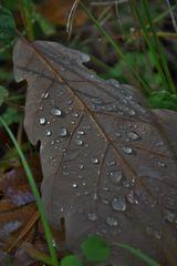 Perlen im Wald