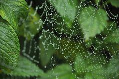 Perlenkette der Natur...