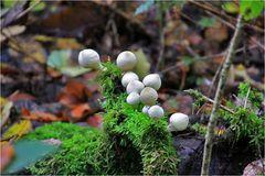 Perlenschmuck des Herbstes