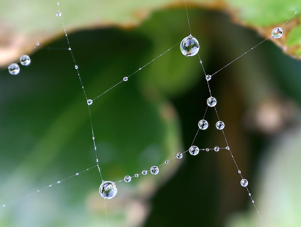 Perlenschnüre