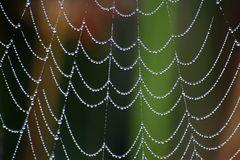 ... Perlenvorhang ...