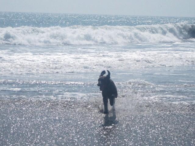 Perrito disfrutando del mar